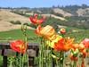 Wine Country California (pomegranatecreations) Tags: bestnaturetnc06