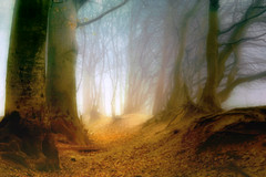misty forest (mitumo) Tags: trees mist fog fairytale forest atmosphere fantasy mysterious wald stimmung instantfave mistyforest magicalworld fireswamp diamondclassphotographer flickrdiamond megashot superhearts gwain essentialbeauty thegoldenmermaid alemdagqualityonlyclub atqueartificia nebligerwald waldimnebel