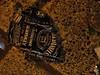 Piccola grande icona di capodanno (Stranju) Tags: jack romania festa capodanno 2007 rotta bottiglia canonpowershots3is stranju withcanonican bracov