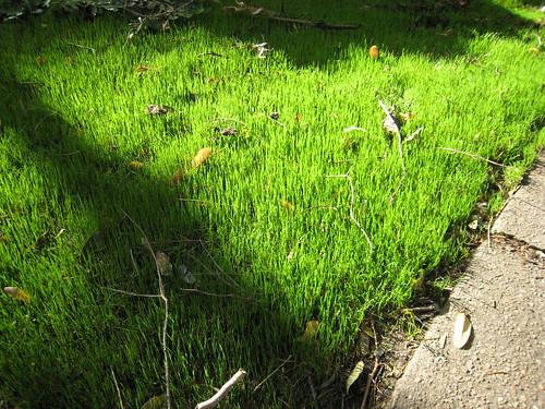 New grass 1