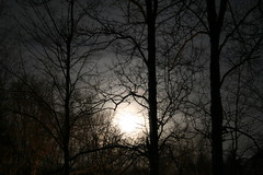 moon rising through the woods