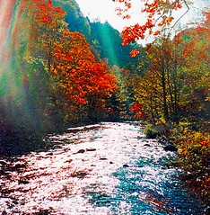 River (Bill(iudshi8uf)) Tags: autumn fall leaves japan river hiroshima kure yasuura