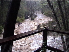 Boulder Creek -- storm swell