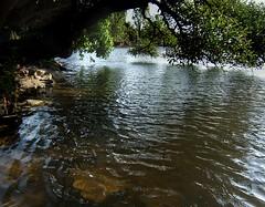 Under the tree (Vince Alongi) Tags: park landscape uruguay pond finepix fujifilm montevideo e500