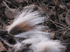 brown and white fur