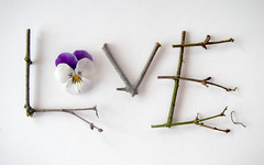 twigs love pansy (Something To See) Tags: love word letters pansy valentine twig