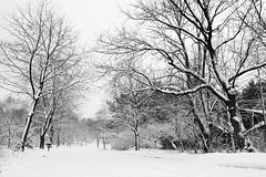 Highland Ave. Madison (Mingfong) Tags: white snow monochrome wisconsin landscape snowy story highland madison albumcover stories        exploretop10  mingfong  madison365  musicflyer  mingfongjan   artbrochure  sketchoflight mingfongphotography