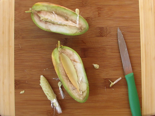 Jasmine (Stephanotis) Fruit - cut open