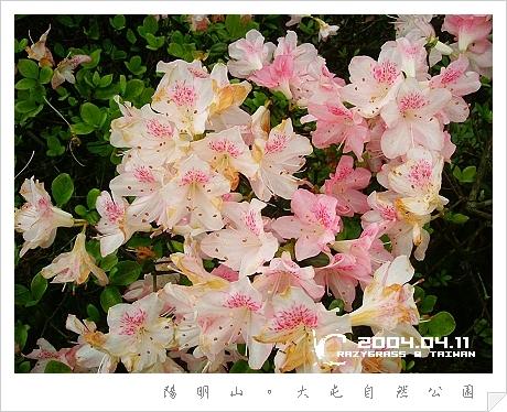 2004_0411Image0038