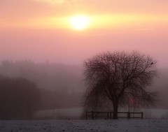 Frosty Sunrise (me'nthedogs) Tags: winter misty sunrise bravo frost devon orton exmoor morebath celebrateseasons