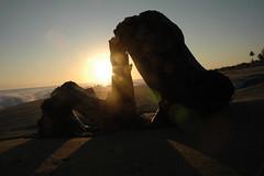 Sunrise on Playa Cabarete (Space Ritual) Tags: morning sun beach sunrise sand surf dominicanrepublic playa driftwood republicadominicana cabarete dimex playacaberete