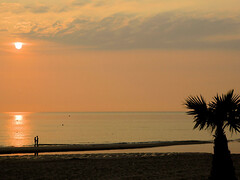 Palm trees in Holland (Bn) Tags: trip sunset sea vacation holiday love beach seaside zonsondergang searchthebest zee romance lovers palmtree zon soe bergenaanzee 10faves aplusphoto diamondclassphotographer searchandreward