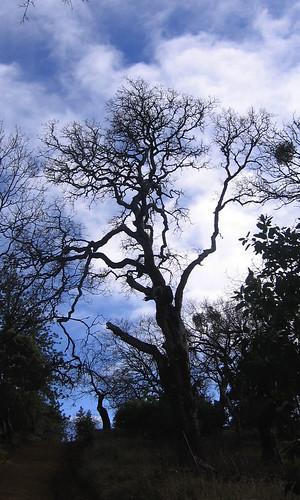 Excellent tree