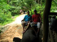 """""""Слоновий вокзал"""". Отъезжаем в путешествие на слонах со специальной площадки."""