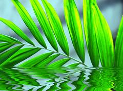 start of summer (DocTony Photography) Tags: plant reflection green nature water leaf bravo searchthebest palm naturesfinest interestingness3 i500 explorefrontpage outstandingshots abigfave impressedbeauty superaplus explore20feb07 doctony