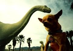 Cabazon Floyd 2 (EllenJo) Tags: california travel chihuahua highway roadtrip floyd dinosaurs 62 2007 cabazon highway62 wheelinn route62 greetingsfromfloydstreet greetingsfromfloydst ellenjoroberts ellenjdroberts ejdroberts ellenjocom travelingchihuahua