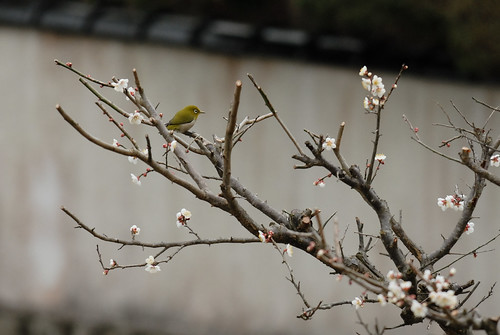 a bird of white-eye #1