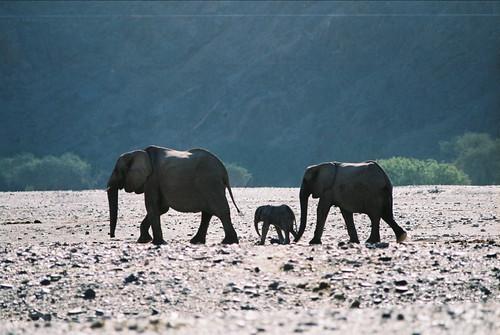 Botswana flickr photo