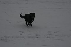 snow-4140 (liltza) Tags: ayres