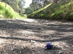 The River Torrens: Not Affected By The Drought