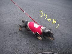 気合いの入るiori.jpg