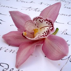 Affettuoso (tenderly) (cattycamehome) Tags: pink flowers music orchid flower macro beautiful beauty tag3 taggedout writing petals bravo poetry tag2 all tag1 purple orchids quote quality  poetic rights sound delicate reserved tender basho excellence tenderly catherineingram magicdonkey flowerotica gtaggroup goddaym1 affettuoso abigfave march2007 cattycamehome goldenphotographer allrightsreserved frhwofavs