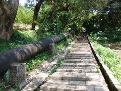 Tienmu Trail