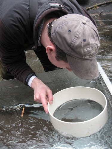 Bull Trout monitoring on the Upper Willamette