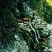 AsiaTrip 1982: Chang Chun Shrine in the mountains of Taiwan