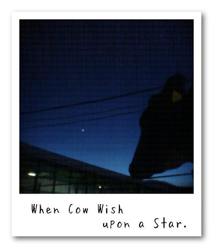 When Cow Wish upon a Star.