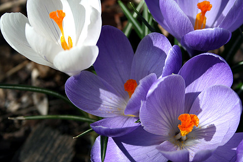 Spring 22