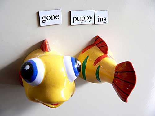 fish and lost poetry magnets