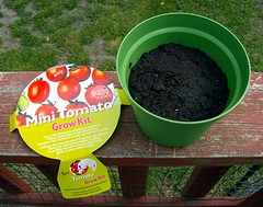 Mini Tomato Grow Kit