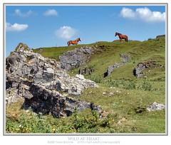 Wild at Heart (Sean Bolton (no longer active)) Tags: blue sky horse castle grass rock wales rural landscape carmarthenshire cymru ruin fortification fortress blackmountain equine wfc llandeilo naturesfinest cadw dyfed seanbolton welshflickrcymru ffotocymrucouk ffotocymru deheubarth castellfarm