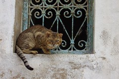 cat on the window (green_lover (I wait for your COMMENTS!)) Tags: cat cats animals window windows wall sousse medina tunisia africa anawesomeshot 10faves theunforgettablepictures