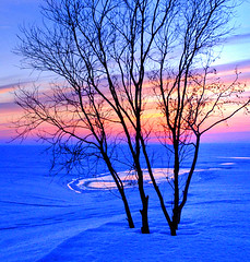 Seashore at dusk (Henri Bonell) Tags: trees sunset snow cold ice evening march glow dusk seashore peopleschoice specnature p1f1 123f25 ci33 anawesomeshot superaplus aplusphoto henribonell superhearts icysea ultrashot