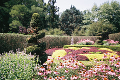(Doug J.) Tags: wickham park connecticut ct gardens pond plants garden film 35mm canon eos rebelg sigma 2880mm thislensisntgreat fuji fujifilm superia xtra 400 bushes flowers