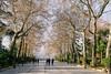 Mañanas de invierno en La Alameda (Miguel.Herrera) Tags: ronda alameda andalucía andalusia invierno paseo