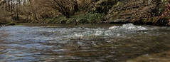 The_Boils_9029 (McConnell Springs) Tags: mcconnellspringspark lexingtonky spring artesianspring lexingtonparksrecreation mcconnellsprings naturalspring