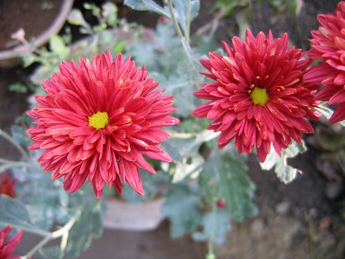 Flowers at Anandvan