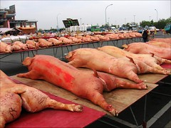 dead pigs with joss sticks stuck on their heads (hey-gem) Tags: animal table dead religious pig scary chinese taiwan pigs offering bloody tainan cultural mortality gory misadventuresintaiwan jiangjyunfish122806 將軍漁港