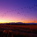 Bosque Sunset Flock in Motion - by Fort Photo