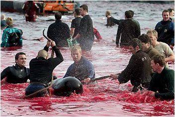 Kinship Circle - 2006-12-27 - 02 - Whale Slaughter