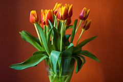 (Hoffmann) Tags: flowers red orange flower green yellow topv111 tulips d70 nikond70 2006 tulip flowersformywife
