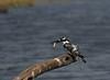 Lunch -2 (bhotchkies) Tags: africa birds bestnaturetnc06