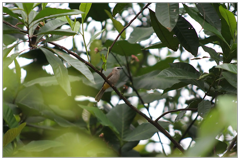 Small Bird from Gasing Hill