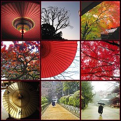 ideas come from the natural world (aurelio.asiain) Tags: trees winter nature fdsflickrtoys poetry path monk explore umbrellas ideas wallacestevens aurelioasiain ionushi asiain mexicaninjapan theasiaingallery