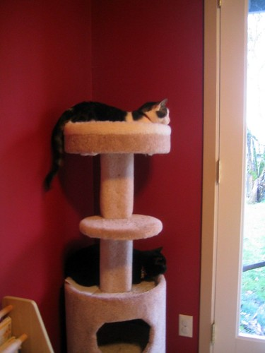 Kitty Castle
