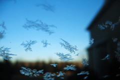 Frosted (t.sullivan photography) Tags: morning blue cold window frost 4seasons windsheild interestingness205 i500