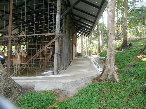 サムイ島‐paradise park farm-walking trail9